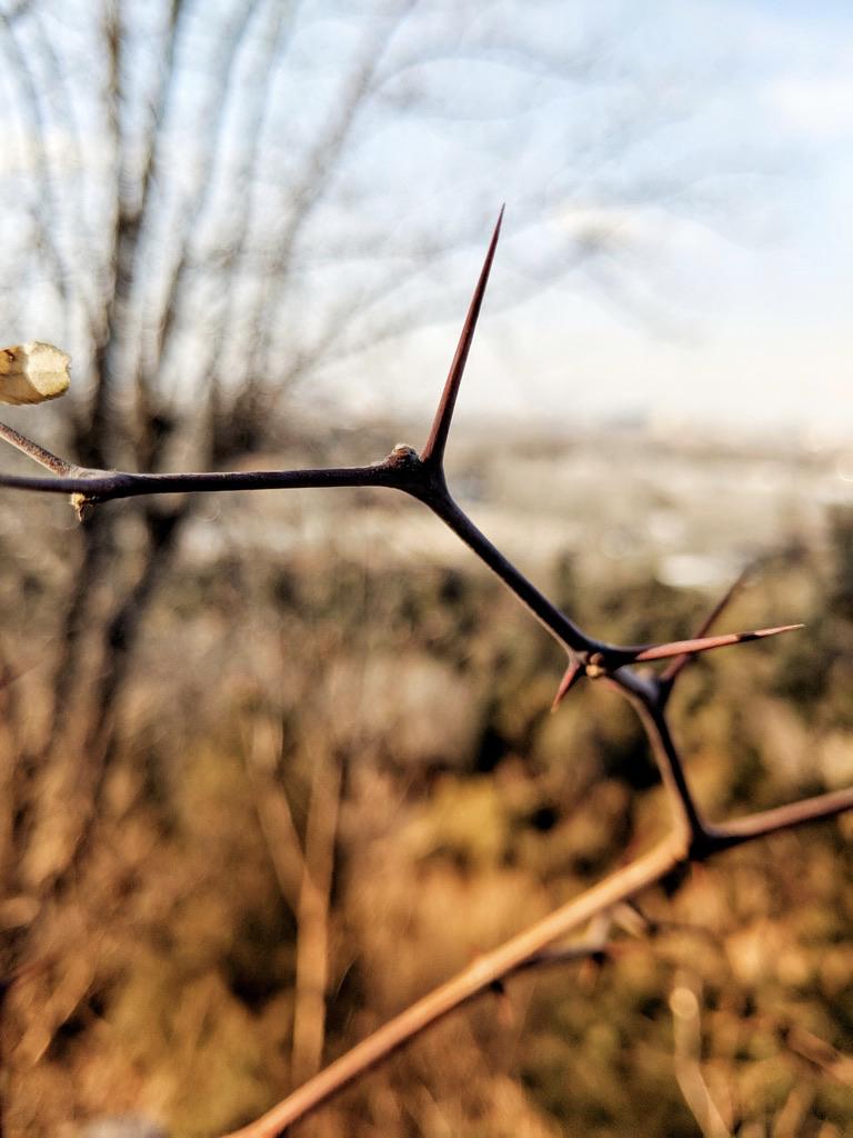 树枝-景山
